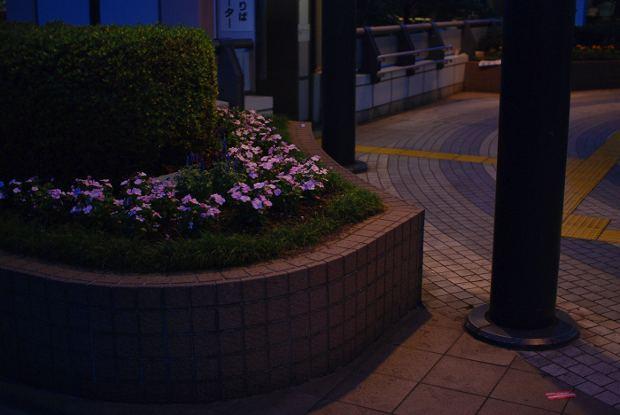 mizonokutiDSC_0274.jpg