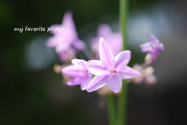 photo_DSC_1414.jpg