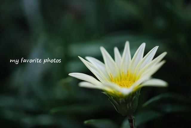 photo_DSC_1418.jpg