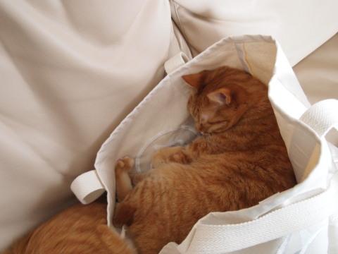 バッグの中のベガ