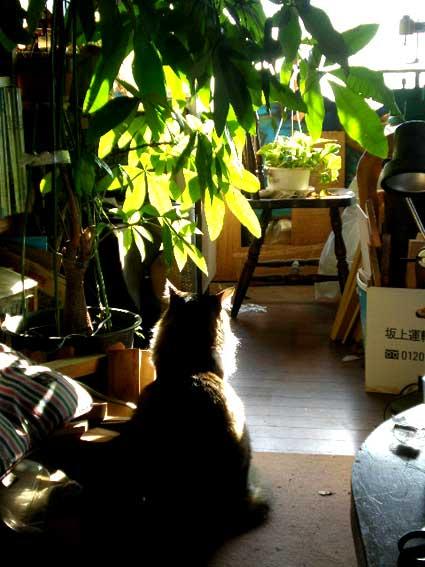 大晦日の陽光とソラン