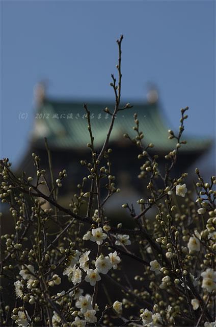 大阪城梅園 梅 2012-02-19-4