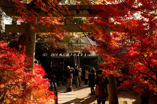 2013年 京都・毘沙門堂の紅葉10