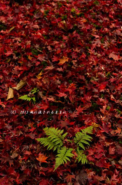2013年 京都・嵯峨野 厭離庵の紅葉15