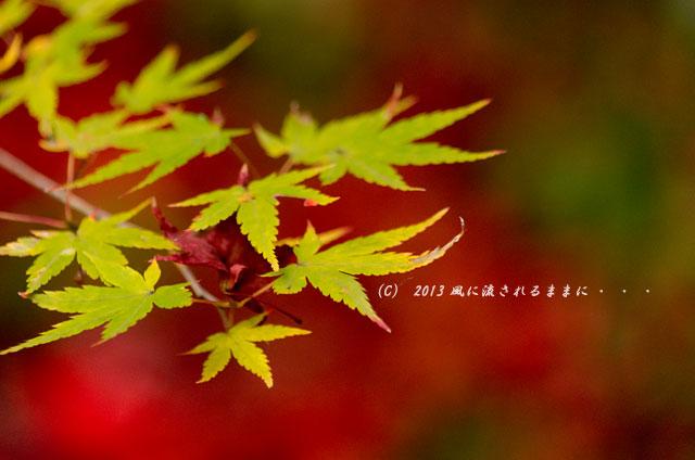 2013年 京都・嵯峨野 厭離庵の紅葉22