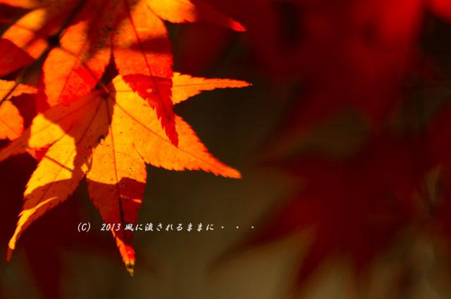 京都・落西 大野原神社の紅葉16