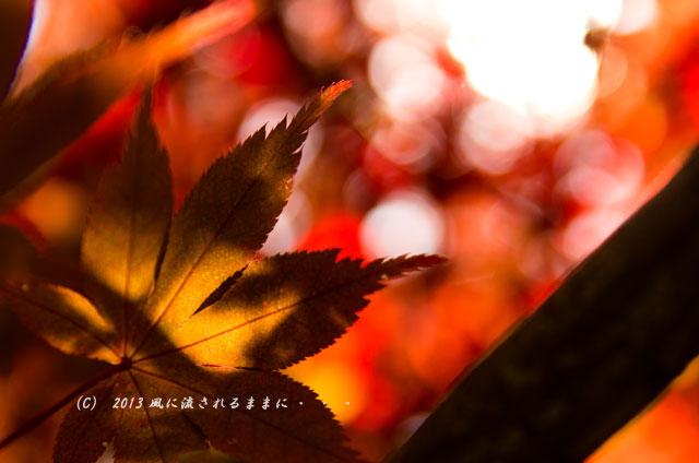 京都・落西 大野原神社の紅葉19