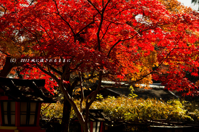 京都・落西 大野原神社の紅葉20