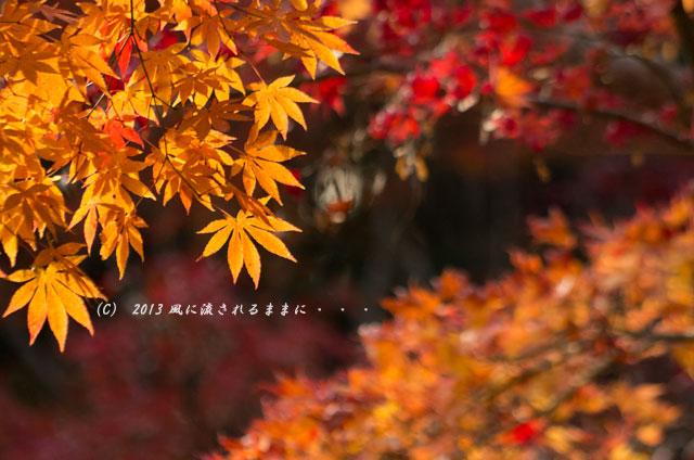 京都・落西 大野原神社の紅葉7