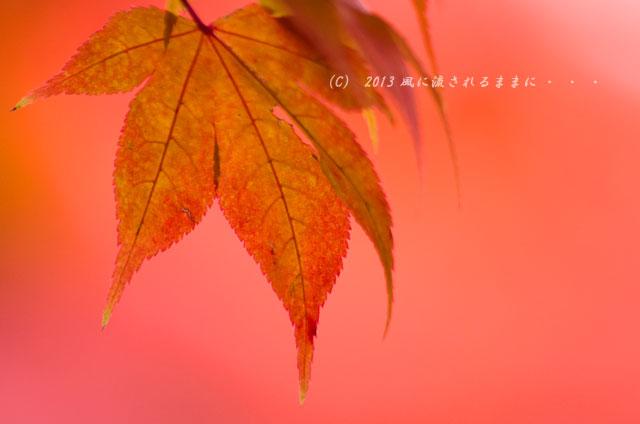 2013年 京都・詩仙堂の紅葉15