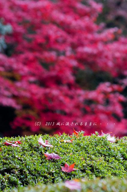 2013年 京都・詩仙堂の紅葉8
