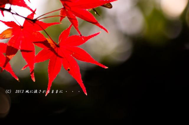 2013年 京都・真如堂の紅葉14