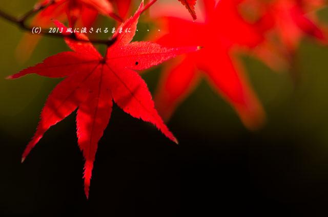 2013_sinnyodou_kouyou15.jpg