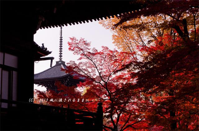 2013年 京都・真如堂の紅葉8
