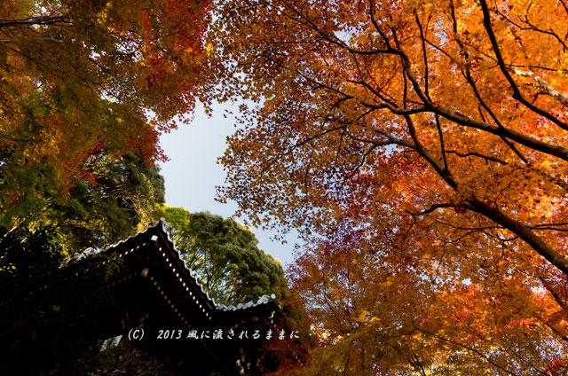 京都・落西 勝持寺(しょうじじ)の紅葉11