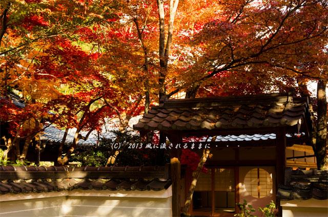 京都・落西 勝持寺(しょうじじ)の紅葉13