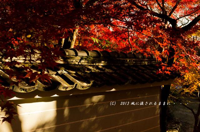 京都・落西 勝持寺(しょうじじ)の紅葉14