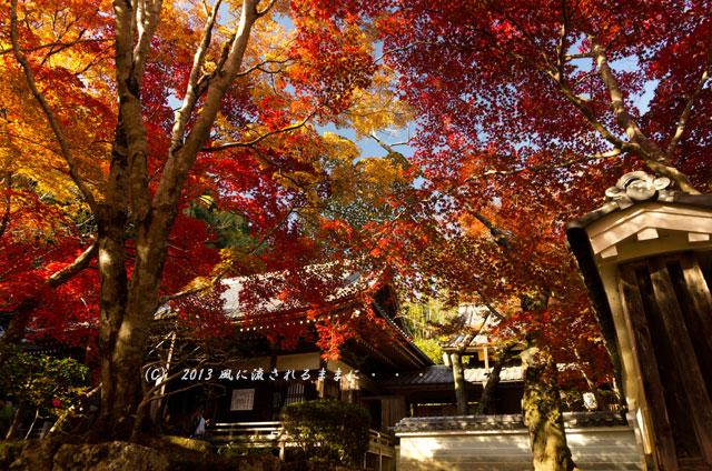 京都・落西 勝持寺(しょうじじ)の紅葉15