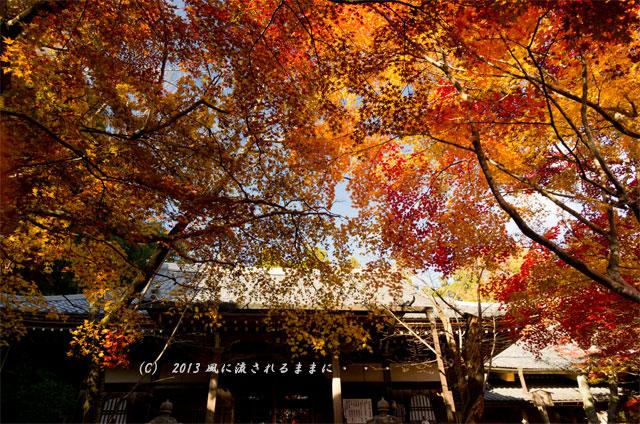 京都・落西 勝持寺(しょうじじ)の紅葉16