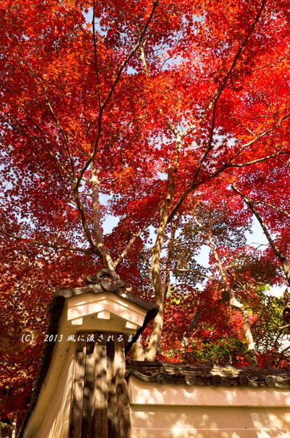京都・落西 勝持寺(しょうじじ)の紅葉17