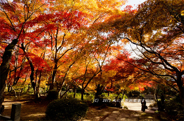 京都・落西 勝持寺(しょうじじ)の紅葉18