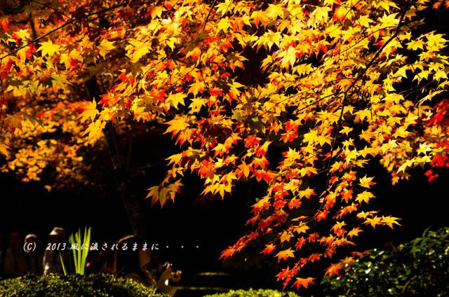 京都・落西 勝持寺(しょうじじ)の紅葉19