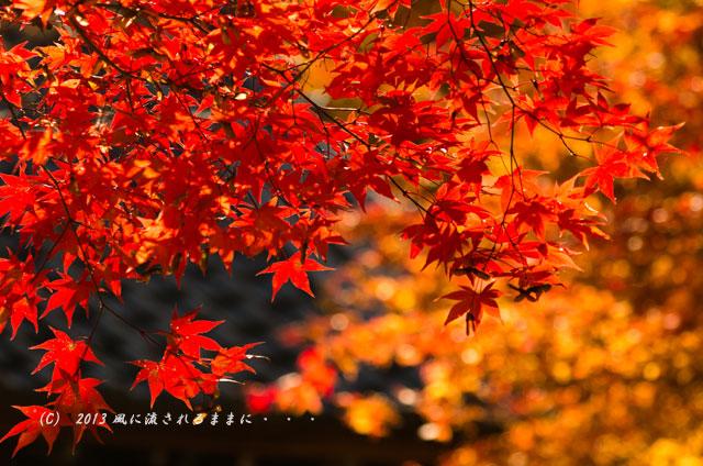 京都・落西 勝持寺(しょうじじ)の紅葉20