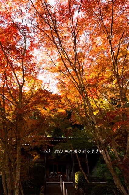 京都・落西 勝持寺(しょうじじ)の紅葉23