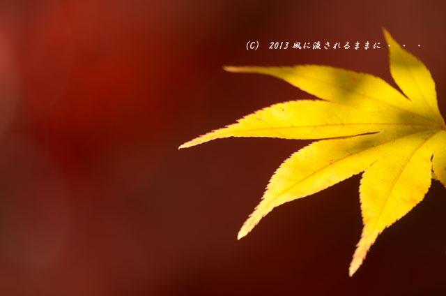 京都・落西 勝持寺(しょうじじ)の紅葉24