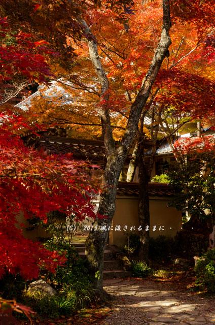 京都・落西 勝持寺(しょうじじ)の紅葉8