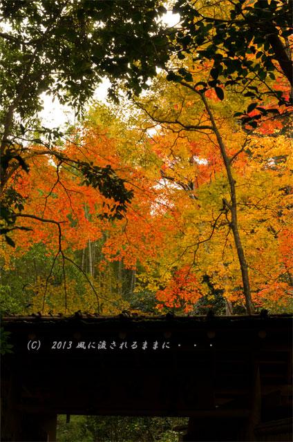 京都・嵯峨野 滝口寺の紅葉6