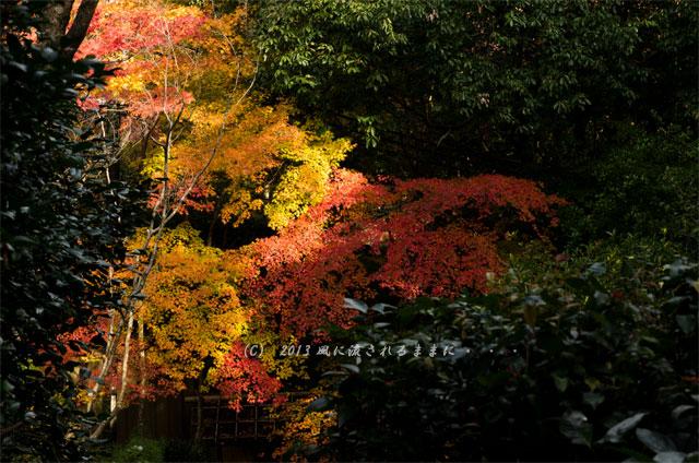 京都・嵯峨野 滝口寺の紅葉8