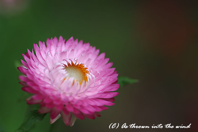 花の植物園7月10日1