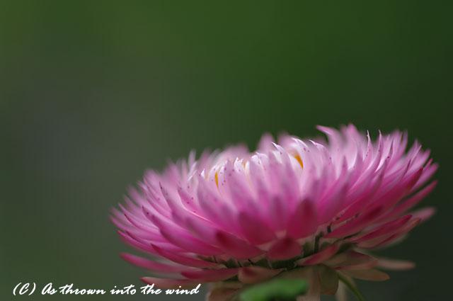 花の植物園7月10日2
