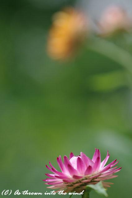 花の植物園7月10日3