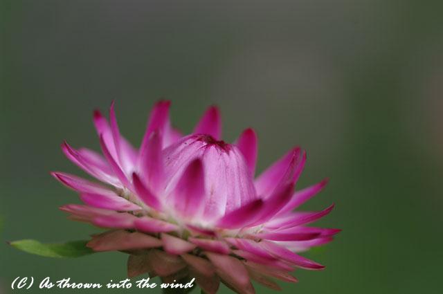 花の植物園7月10日4