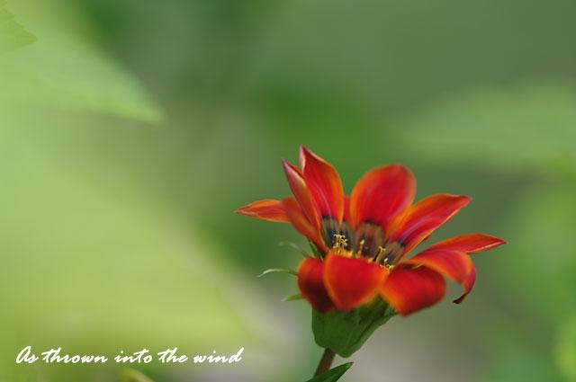 長居植物園 花1
