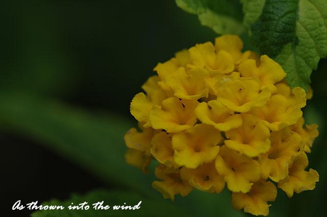 長居植物園 花2