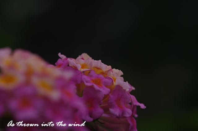 長居植物園 花3