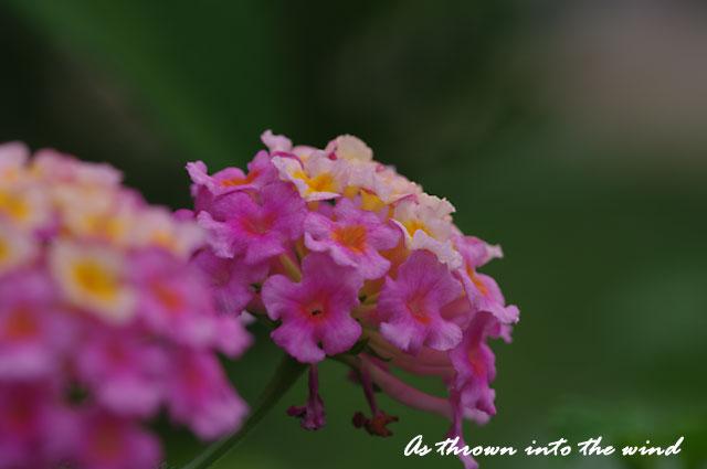 長居植物園 花4