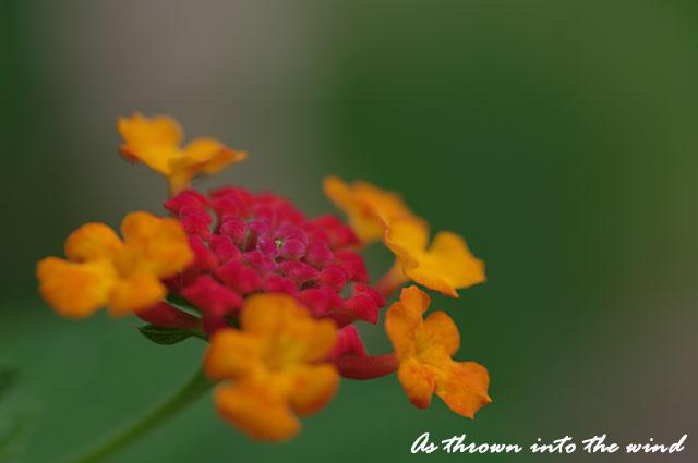 長居植物園 花5