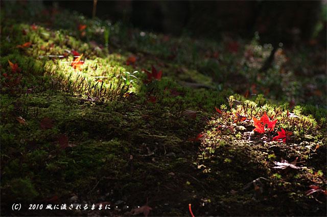 京都・醍醐寺 紅葉と光2
