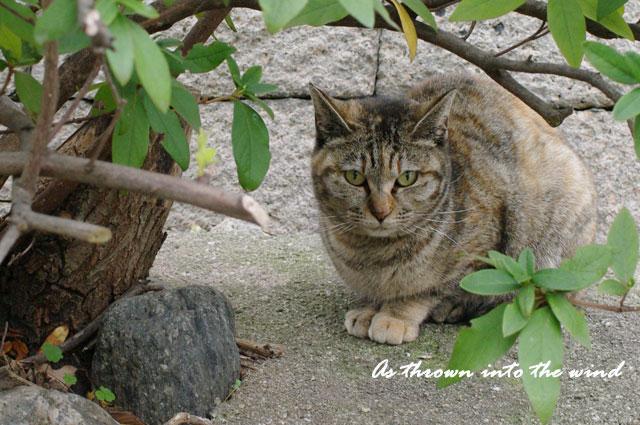 口縄坂の猫