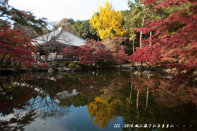 京都・醍醐寺 林泉苑銀杏1