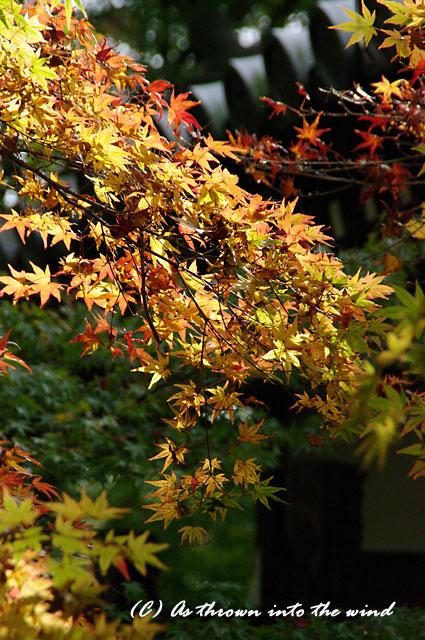 京都・永観堂5