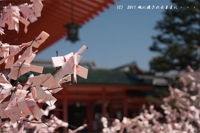 平安神宮の桜1
