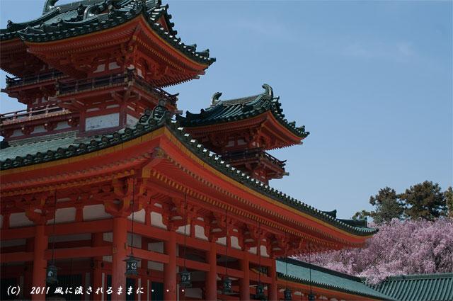 平安神宮の桜2
