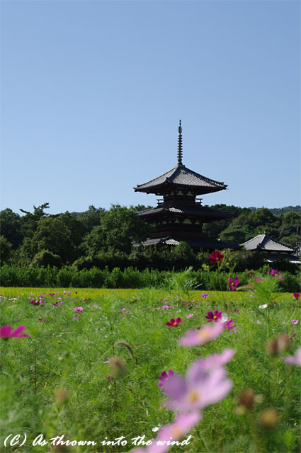奈良 法起寺1