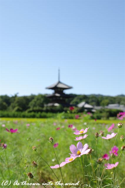 奈良 法起寺2