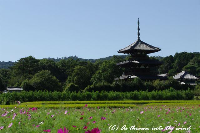 奈良 法起寺3